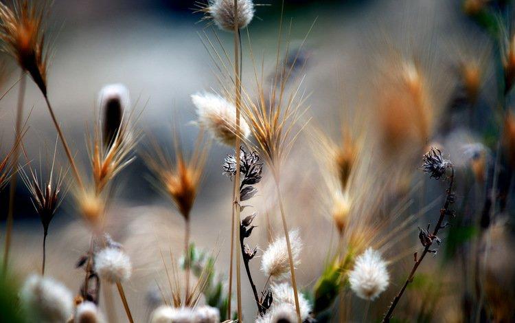 трава, природа, растения, макро, поле, стебли, grass, nature, plants, macro, field, stems