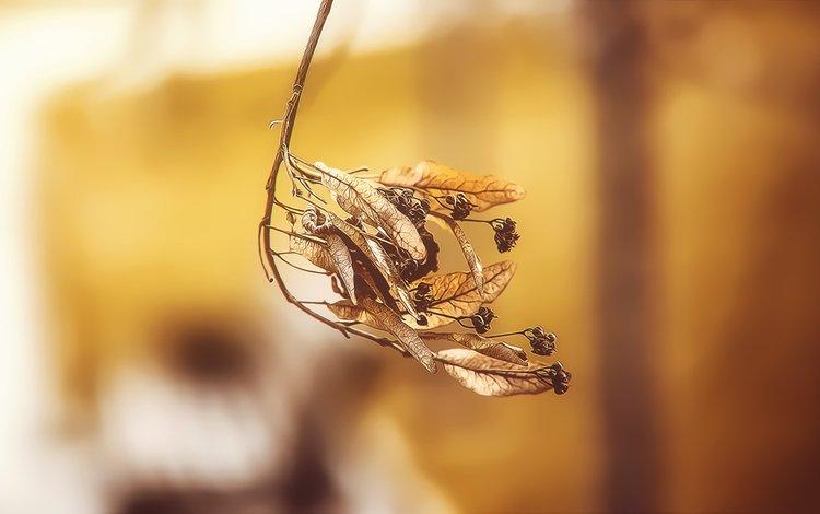 ветка, природа, листья, осень, лист, branch, nature, leaves, autumn, sheet