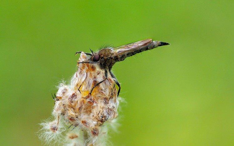 макро, насекомое, растение, муха, летают, ziva & amir, macro, insect, plant, fly
