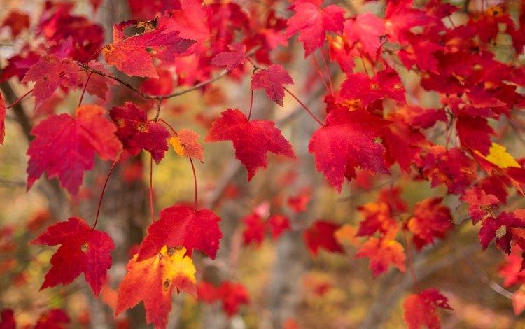 природа, листья, макро, ветки, осень, nature, leaves, macro, branches, autumn
