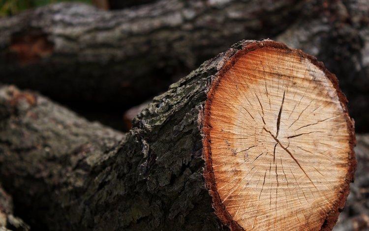 tree, log, spil