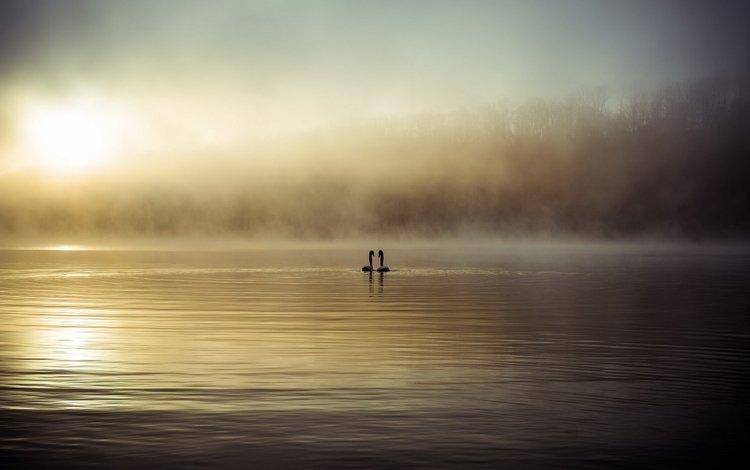 озеро, туман, птицы, лебеди, lake, fog, birds, swans