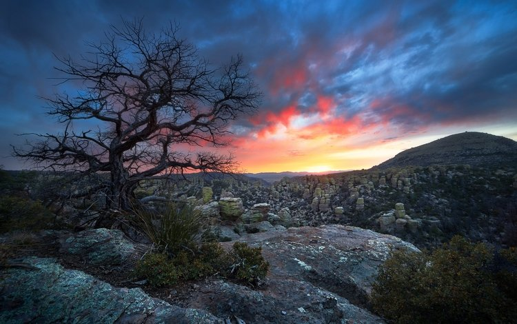 небо, горы, дерево, закат, пейзаж, сша, национальный парк chiricahua, luke sergent, the sky, mountains, tree, sunset, landscape, usa, national park chiricahua