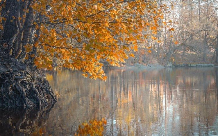 деревья, река, листья, утро, туман, осень, trees, river, leaves, morning, fog, autumn