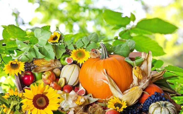 виноград, тыква, фрукты, груши, яблоки, инжир, осень, каштаны, кукуруза, кукуру, подсолнухи, овощи, киви, grapes, pumpkin, fruit, pear, apples, figs, autumn, chestnuts, corn, kukuru, sunflowers, vegetables, kiwi