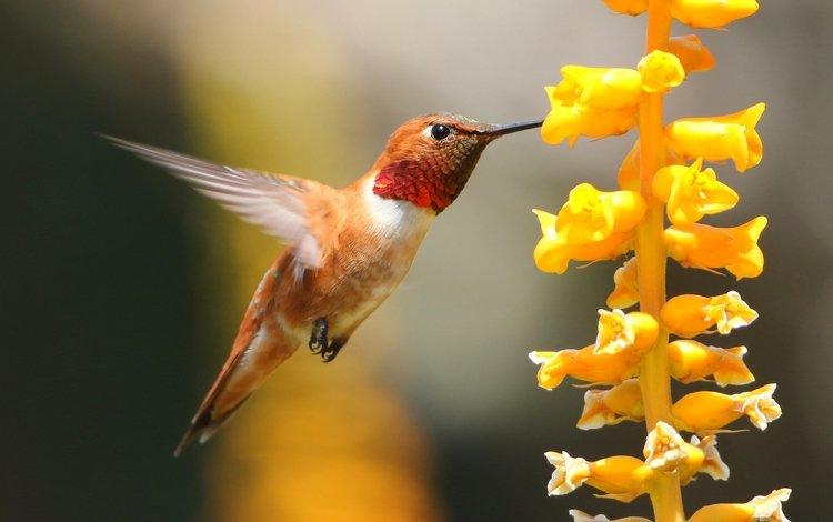макро, цветок, птица, клюв, колибри, macro, flower, bird, beak, hummingbird