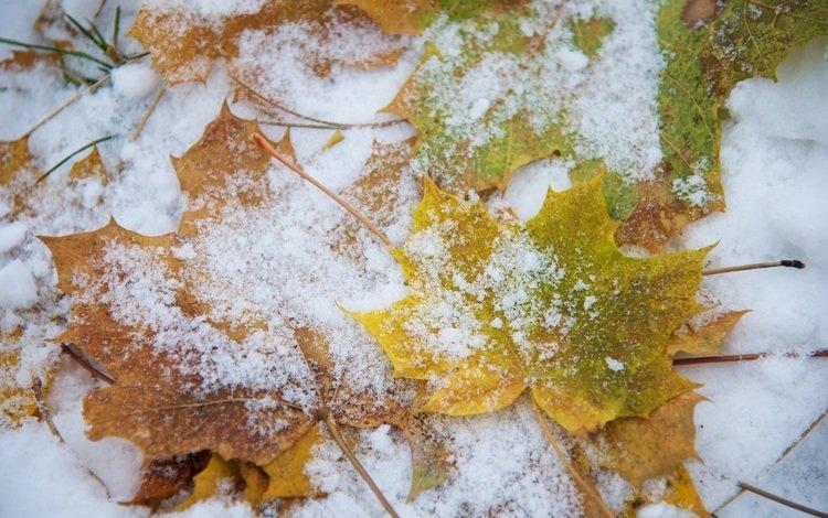 снег, листья, макро, snow, leaves, macro
