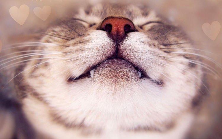 морда, кот, усы, кошка, клыки, нос, face, cat, mustache, fangs, nose