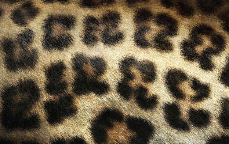 текстура, леопард, мех, texture, leopard, fur