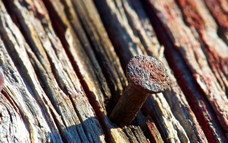 дерево, макро, доска, гвоздь, ржавчина, tree, macro, board, nail, rust