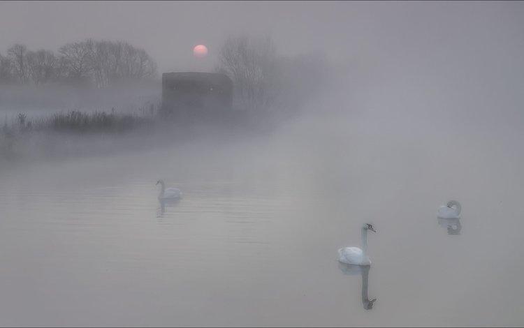озеро, природа, утро, туман, птицы, лебеди, lake, nature, morning, fog, birds, swans