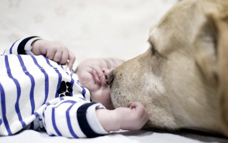 сон, нежность, собака, малыш, дети, уют, дом, rebenok, sobaka, лицо, domashnie zhivotnye, настроения, ребенок, друг, sleep, tenderness, dog, baby, children, comfort, house, face, mood, child, each
