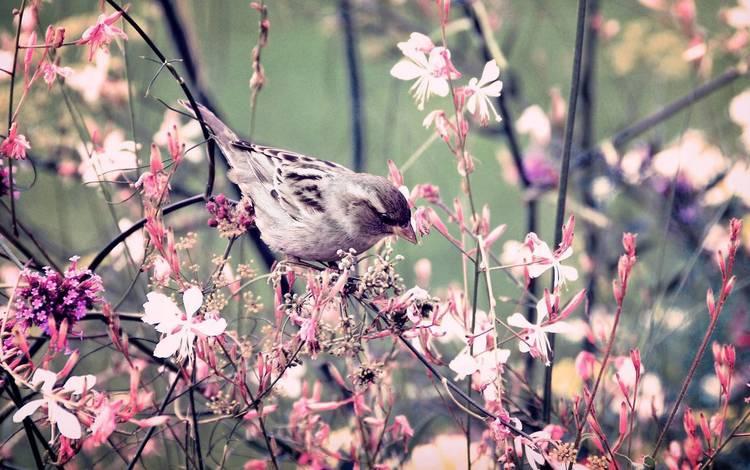 цветы, ветки, крылья, птица, клюв, весна, воробей, перья, flowers, branches, wings, bird, beak, spring, sparrow, feathers