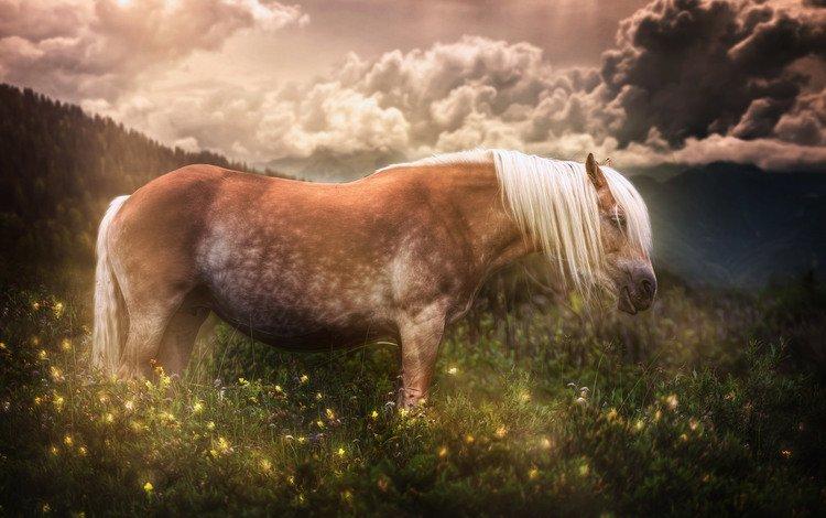 цветы, лошадь, трава, природа, лето, луг, конь, flowers, horse, grass, nature, summer, meadow