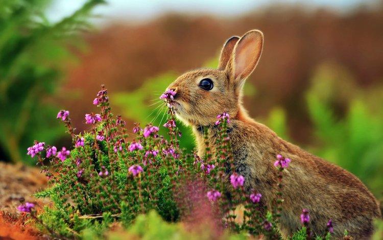 цветы, трава, животные, кролик, заяц, flowers, grass, animals, rabbit, hare