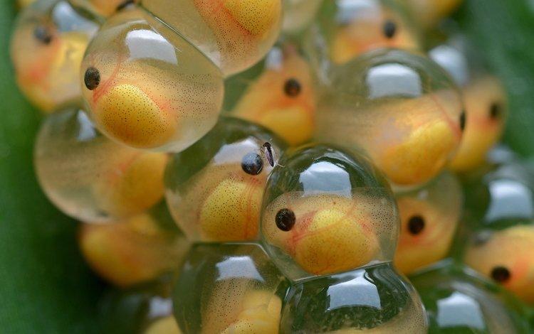 макро, рыбки, рыбы, подводный мир, маленькие, икринки, macro, fish, underwater world, small, eggs