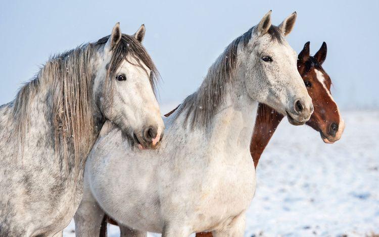 лошади, кони, horse, horses