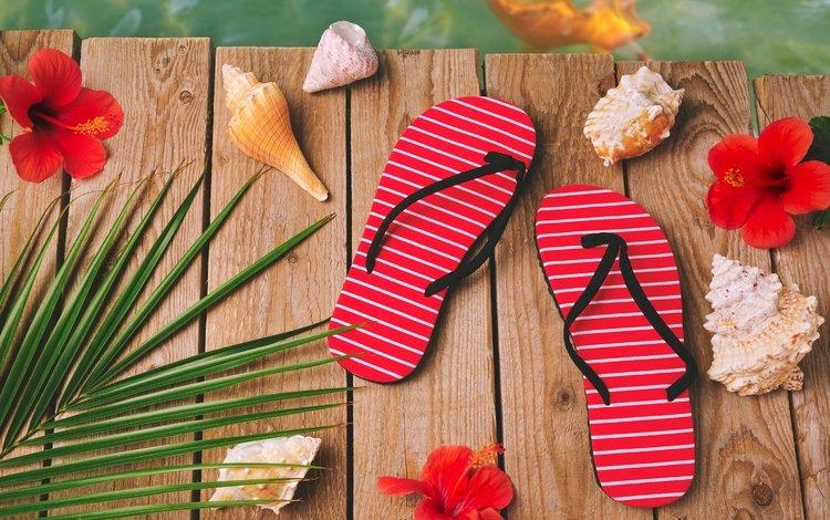 цветы, сланцы, песок, летнее, аксессуаров, пляж, лето, ракушки, морская звезда, песка, seashells, каникулы, flowers, slates, sand, accessories, beach, summer, shell, starfish, vacation