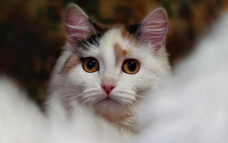 кот, кошка, cat