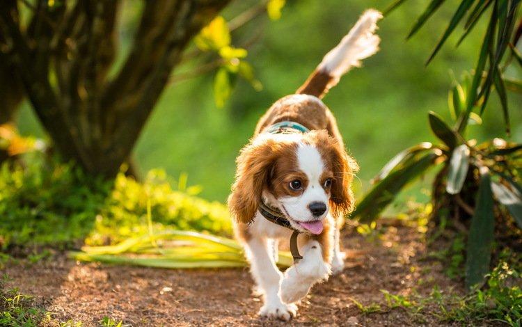 зелень, растения, дорожка, лето, собака, greens, plants, track, summer, dog