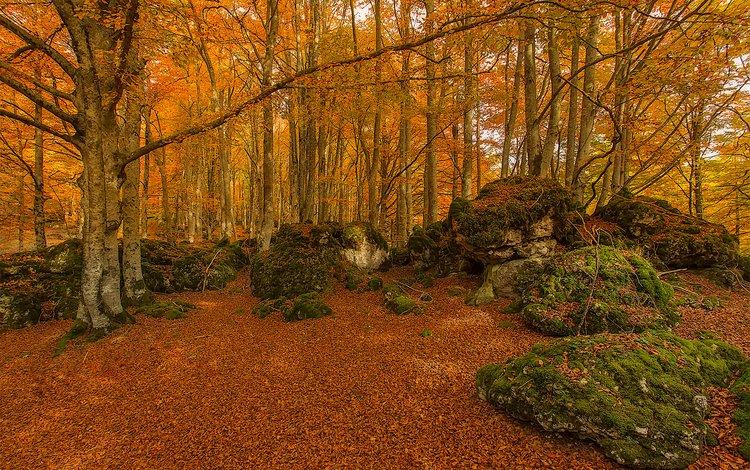 trees, stones, forest, autumn, moss, spain, urabain, basque country