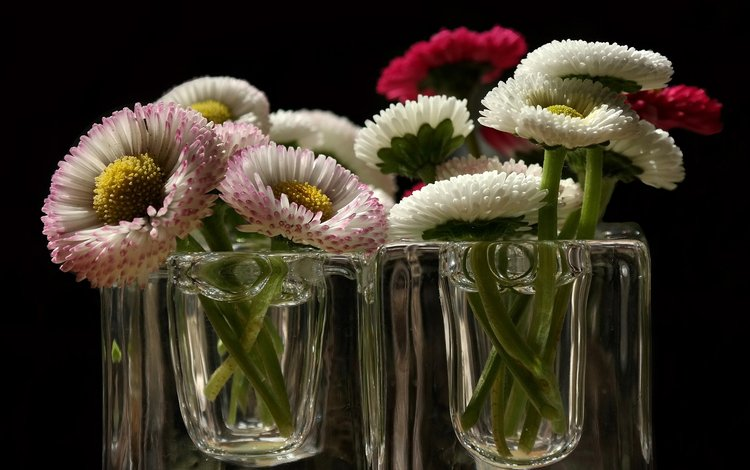 цветы, фон, лепестки, стекло, стакан, flowers, background, petals, glass