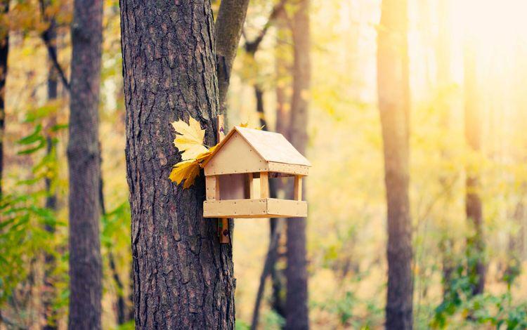 лес, осень, домик для птиц, forest, autumn, house for birds