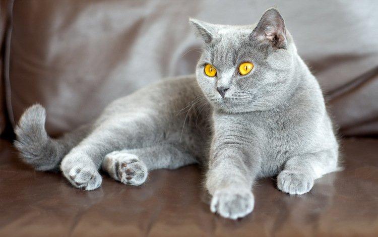фон, кошка, взгляд, background, cat, look