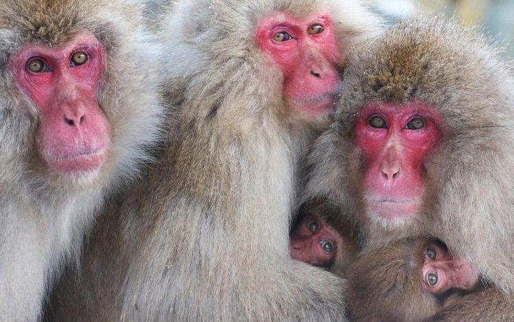 природа, взгляд, обезьяны, nature, look, monkey