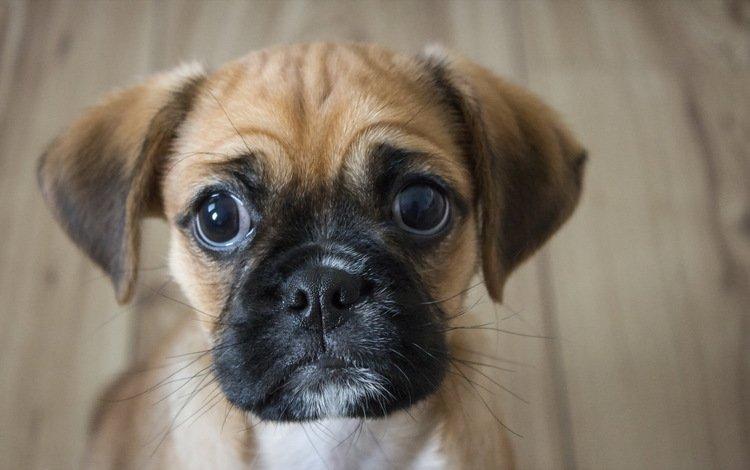 взгляд, собака, друг, look, dog, each