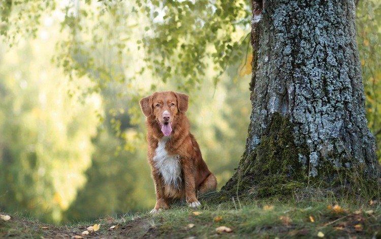 дерево, взгляд, собака, друг, tree, look, dog, each