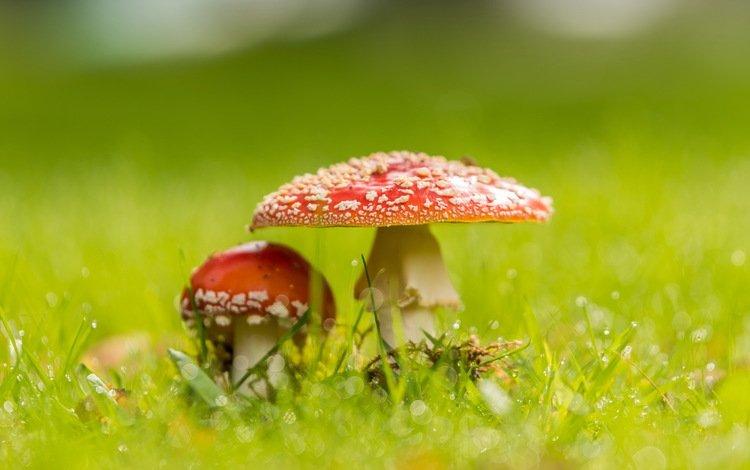 природа, фон, грибы, nature, background, mushrooms