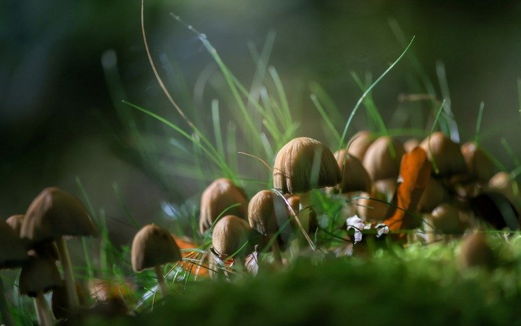 природа, осень, грибы, nature, autumn, mushrooms