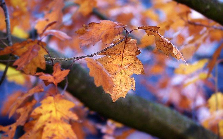природа, листья, осень, боке, осенние листья, nature, leaves, autumn, bokeh, autumn leaves