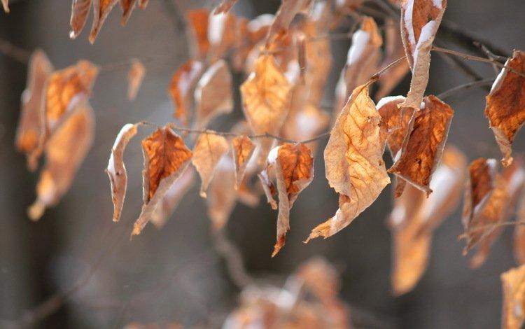 природа, листья, ветки, осень, сухие листья, осенние листья, nature, leaves, branches, autumn, dry leaves, autumn leaves