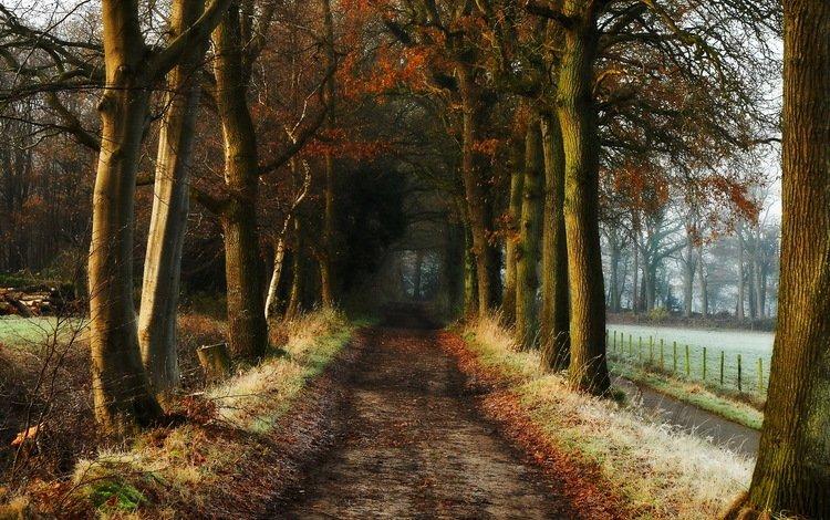 дорога, деревья, природа, осень, road, trees, nature, autumn