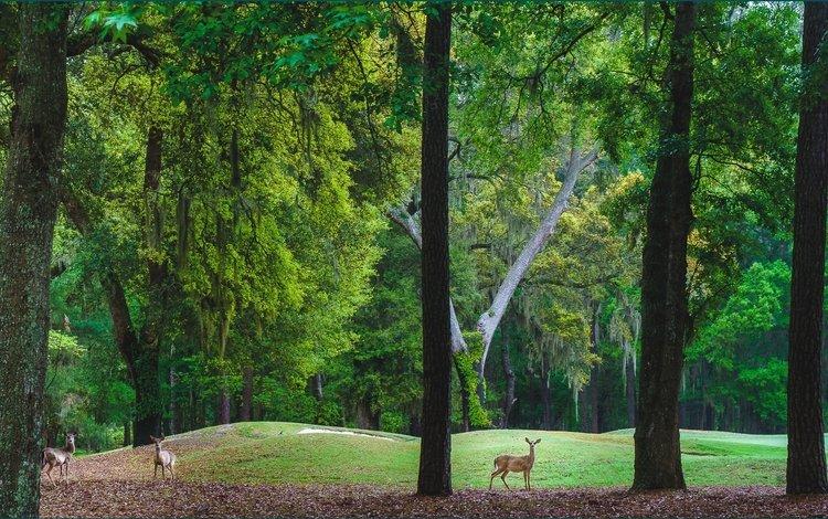 деревья, холмы, пейзаж, парк, олени, trees, hills, landscape, park, deer