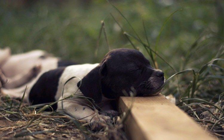 взгляд, собака, друг, французский бульдог, buldog frances, look, dog, each, french bulldog