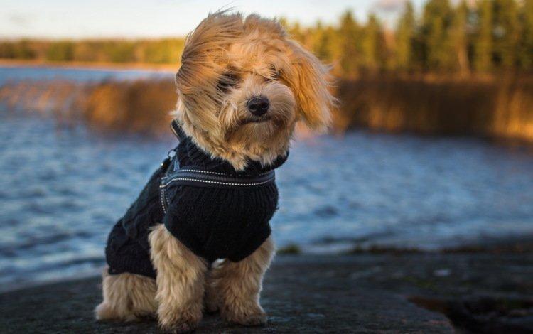 взгляд, собака, друг, бишон, look, dog, each, bichon