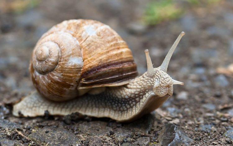 макро, улитка, раковина, macro, snail, sink