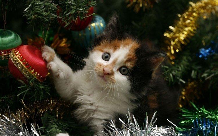 новый год, елка, кот, кошка, котенок, праздник, мишура, new year, tree, cat, kitty, holiday, tinsel