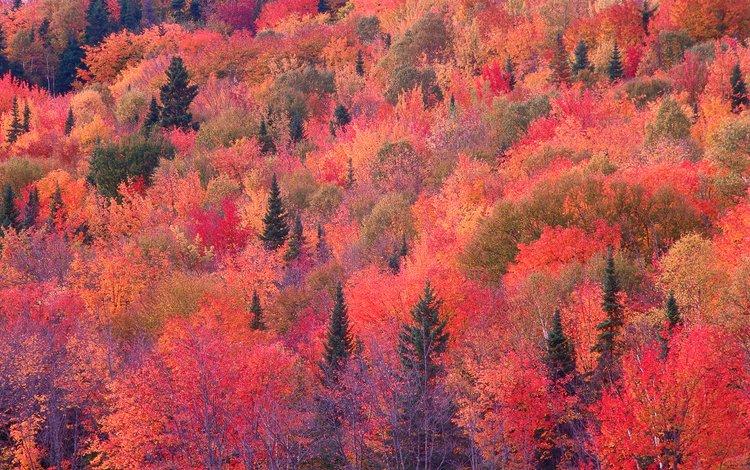 деревья, лес, склон, осень, багрянец, trees, forest, slope, autumn, the crimson