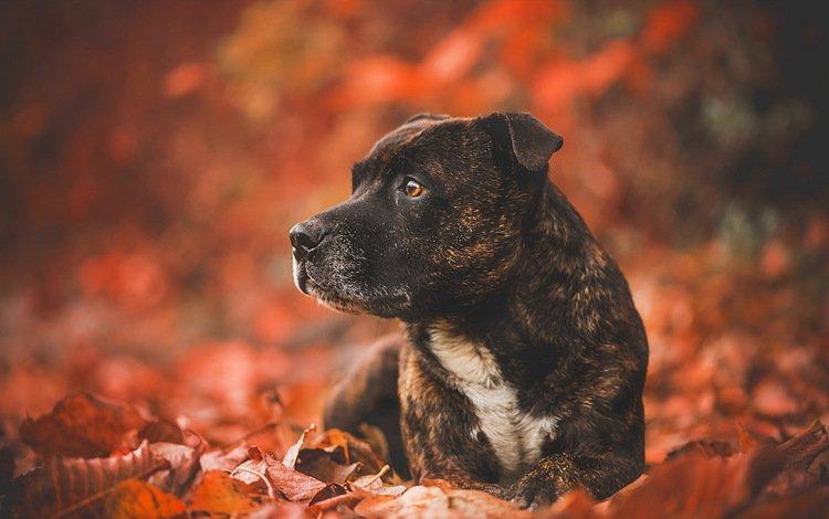 Собака лист бесплатно