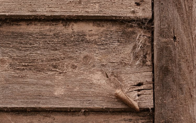dirt, earth, tree, web, door, wood