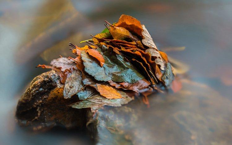 вода, природа, листья, осень, water, nature, leaves, autumn