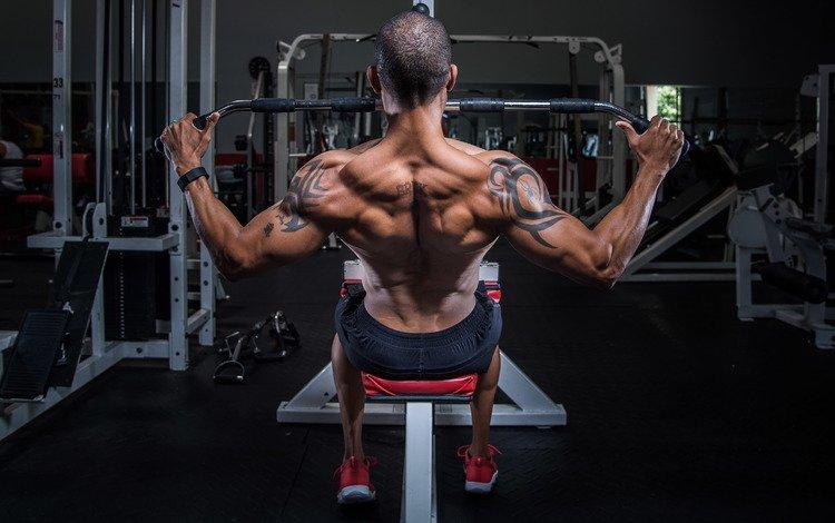 male, man, back, bodybuilding, training, workout