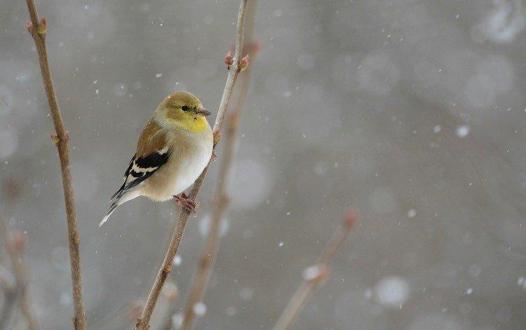 снег, зима, птица, snowing, птаха, snow, winter, bird
