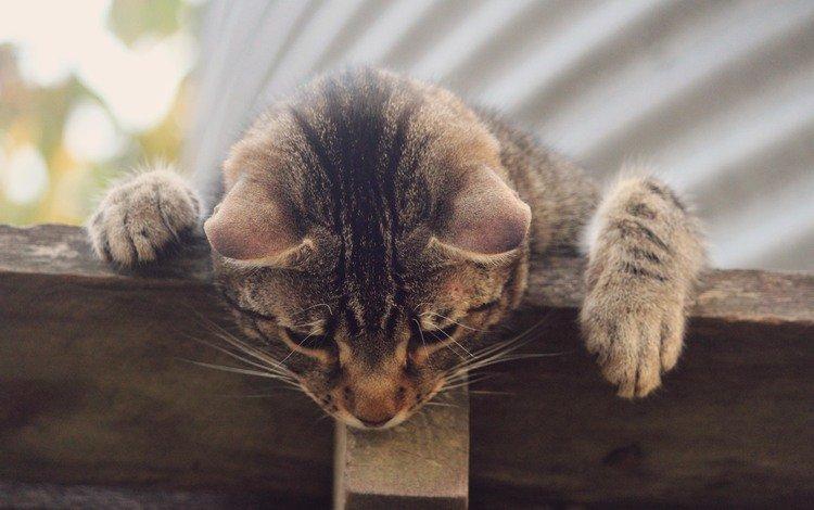 cat, mustache, animal, ears, curiosity, legs