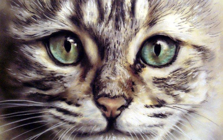 морда, кот, усы, взгляд, животное, живопись, face, cat, mustache, look, animal, painting