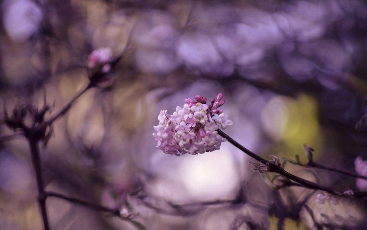 цветение, макро, ветки, весна, цветки, боке, flowering, macro, branches, spring, flowers, bokeh